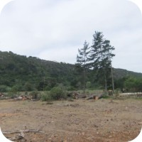 land clearing plettenberg bay garden route