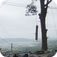 problematic tree felling knysna power lines