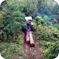 blackwood tree harvesting fsc standards 4x4 tractor