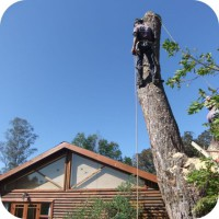 house problematic tree felling knysna