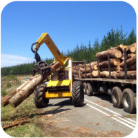 harvesting pine and bluegum Plettenberg Bay Knysna