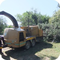 Residential tree felling in Plettenberg Bay, Knysna and Garden Route.