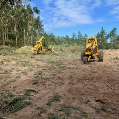 tree felling land clearing plant hire tlb digger loader roller bomag knysna plettenberg bay garden route property development invasive alien plant hire property development fire break