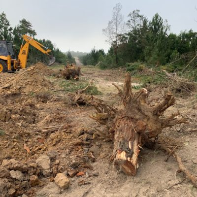 digger loader excavator tipper truck land clearing stump removal plettenberg bay garden route knysna big tree tree felling tree stumps blue gum digger